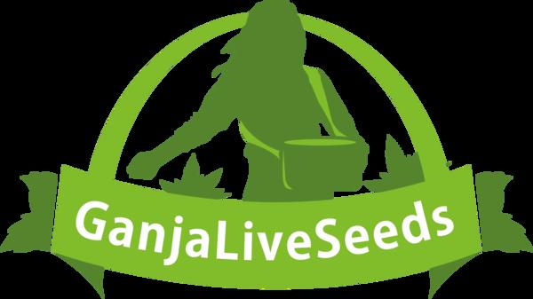 Дешевые и качественные семена конопли | GanjaLiveSeeds