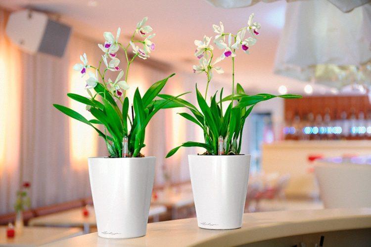 Купить комнатные цветы от компании Украфлора.
